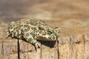 © Panpalini | Dreamstime.com - Toad Photo