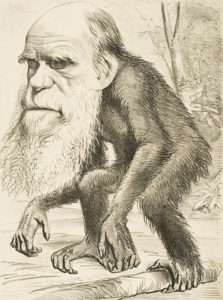 Editorial cartoon of Darwin as an ape (1871)